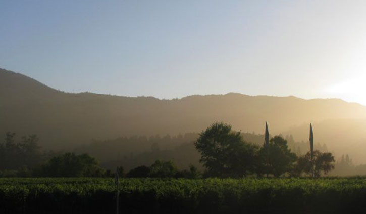 10 Reasons to Visit Napa/Sonoma Wine Country Now